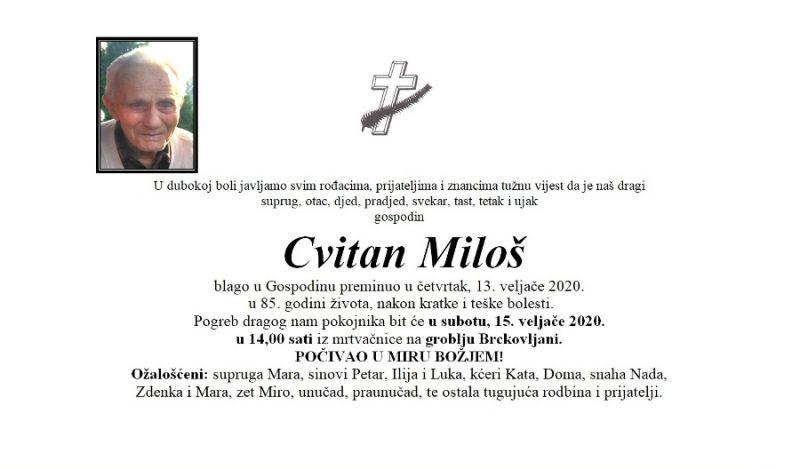 cvitan_milos